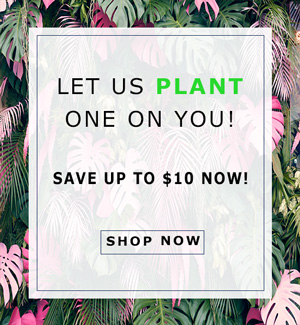 Let Us Plant One On You! Save up to $10 Now!
